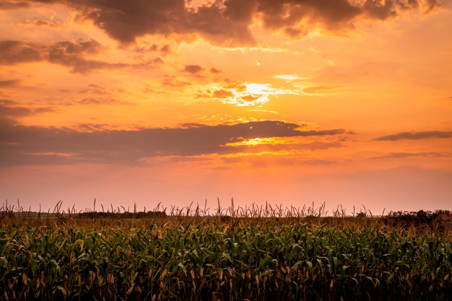 food light dawn landscape